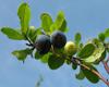 中國藍莓網專題二