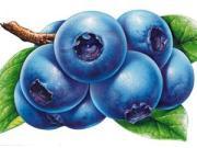 對丹東藍莓產業發展的幾點思考