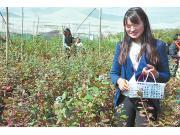 澄江冬季蓝莓上市价格高
