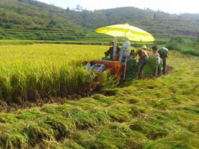 文山州:实施水稻生产机械化技术,为稻农节本增效二千余万元