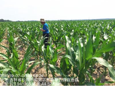 吉林:前郭县农机服务中心全面开展保护性耕作作业补贴面积县级抽检工作