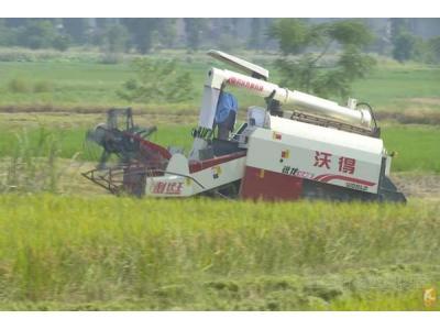 宜春市丰城市:机助力早稻收割