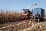 莖穗兼收玉米收割機,一機難求的秘密!