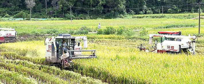 升级大战风云又起,全喂入水稻联合收获机跨入7公斤时代!